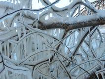 Branches d'arbre en glace d'hiver, Lithuanie Photos libres de droits