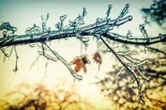 Branches d'arbre glaciales d'érable à la lumière du soleil - rétro Photographie stock libre de droits