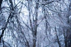Branches d'arbre glaciales la nuit en hiver Photos stock
