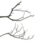 Branches d'arbre mortes d'isolement sur le blanc Image stock