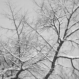 Branches d'arbre négatives Photo libre de droits