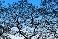 Branches d'arbre noires abstraites sur le point culminant bleu de fond Photographie stock libre de droits