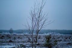 branches d'arbre nues en automne en retard sans des feuilles photographie stock libre de droits