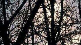 Branches d'arbre par les rayons des soleils banque de vidéos