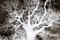 Branches d'arbre - résumé Images stock