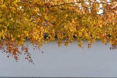 Branches d'arbre rougeoyantes de hêtre Photo stock