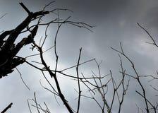 Branches d'arbre sèches contre le ciel gris Images libres de droits