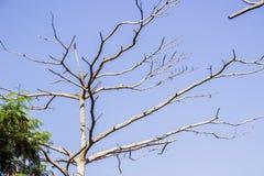Branches d'arbre sèches en automne image stock
