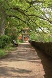 Branches d'arbre s'élevant au-dessus d'un chemin de marche photographie stock