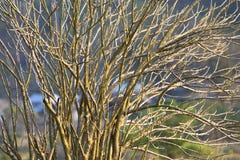 Branches d'arbre sans feuilles image stock