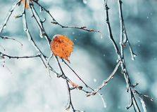 branches d'arbre scintillantes couvertes de la glace en mauvais temps photographie stock libre de droits