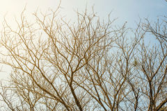 Branches d'arbre sur le fond de ciel bleu Image libre de droits