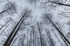 Branches d'arbres contre le ciel d'hiver Photo libre de droits