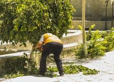 Branches d'arbres de coupe de jardinier avec des tondeuses Concept de maison et de jardin photos stock