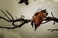 Branches d'automne Image libre de droits