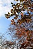 Branches d'automne sur le ciel Images libres de droits