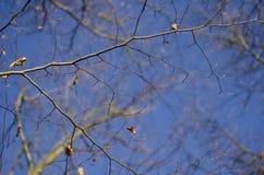 Branches d'hiver Photo libre de droits