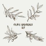 Branches d'olivier graphiques réglées Illustration de vecteur Photo stock