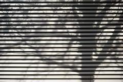 Branches d'ombre sur le fer ondulé Photo stock