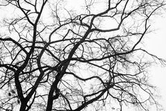 Branches d'un arbre d'hiver Photo stock