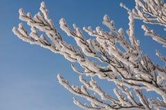 Branches d'un arbre dans la neige sur un fond de ciel bleu Images libres de droits