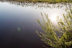 Branches d'un bosquet avec de jeunes feuilles vertes sur le fond d'un étang bleu, une réflexion du soleil dans l'eau Photos stock