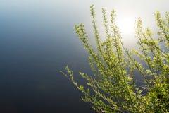 Branches d'un bosquet avec de jeunes feuilles vertes sur le fond d'un étang bleu, une réflexion du soleil dans l'eau Photographie stock libre de droits