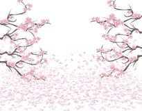 Branches d'une cerise rose de floraison des deux côtés de la photo Sakura Les pétales volent dans le vent et se trouvent sur Images libres de droits