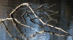Branches dans l'eau Photos libres de droits