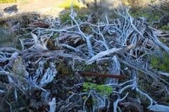 Branches dans l'ombre Photographie stock libre de droits
