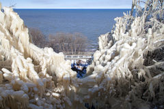 Branches dans la glace Images stock