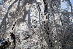 Branches dans la glace Photographie stock libre de droits