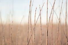 Branches dans la lumière de lever de soleil, fond étonnant d'hiver Photo stock