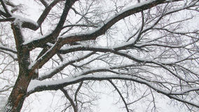 Branches dans le Central Park Images libres de droits