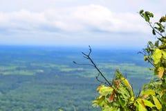 Branches dans le domaine Photo stock