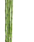 Branches de bambou d'isolement sur le fond blanc Image libre de droits