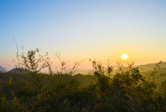 Branches de bambou de lever de soleil Photographie stock