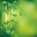 Branches de bouleau Image stock