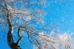 Branches de bouleau dans le gel contre le ciel Image stock