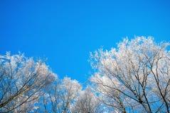 Branches de bouleau dans le gel contre le ciel Images libres de droits