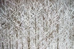 Branches de Bush couvertes de neige pelucheuse fraîche photo libre de droits