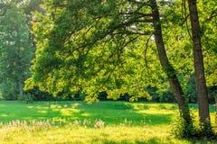Branches de chêne au-dessus d'herbe verte de champ Photo libre de droits