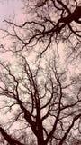 Branches de ciel Image libre de droits