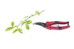 Branches de coupe de poignée Photographie stock