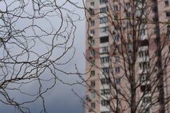 Branches de enroulement gracieuses contre la maison moderne image stock