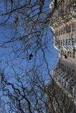 Branches de enroulement gracieuses photos stock