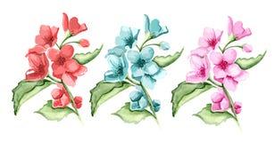 Branches de fleur Photos libres de droits