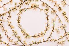 Branches de floraison de ressort d'un arbre fruitier avec les fleurs blanches sur un fond rose avec l'espace pour la vue supérieu Images libres de droits