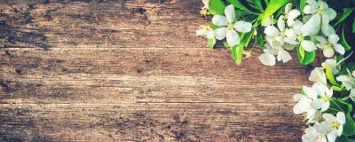 Branches de floraison de ressort sur le fond en bois photo libre de droits