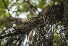 Branches de grands arbres dans la forêt photo stock